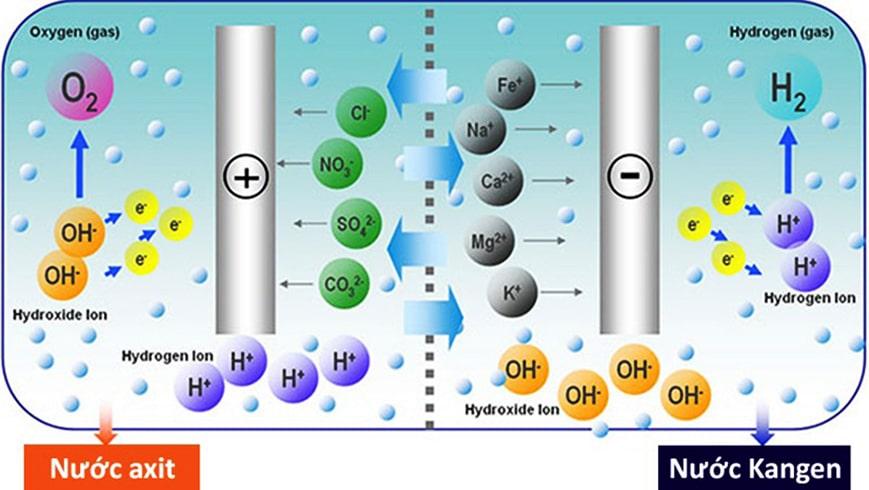 Quy trình tạo ra nước ion kiềm của máy lọc nước tạo kiềm Kangen
